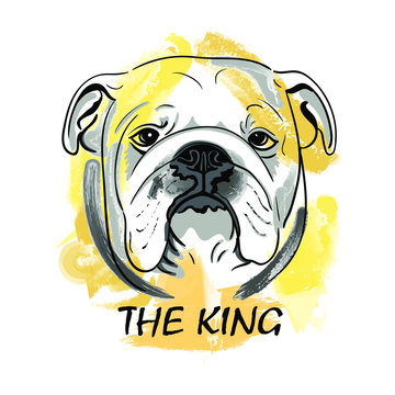 Muzzle English Bulldog Dog with lettering skull and inscriptionThe King  isolated on white background. Template. Close-up. Clip art. Hand Painting. Ink. Line art