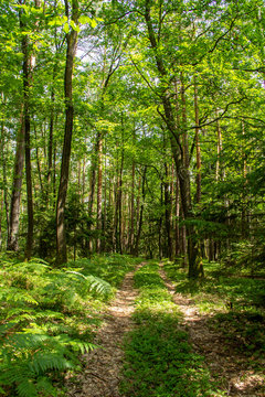 Walk in the Woods in Spring