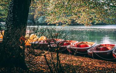 Kölner Herbst