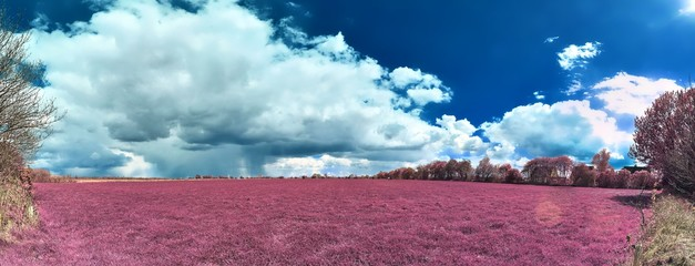Poster Crimson Beautiful pink infrared landscape panorama with a deep blue sky in high resolution