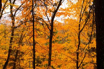 Fall colours in Algonquin Park, Canada