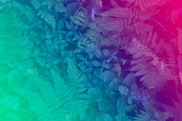 Neon light glowing over leaves. Duotone creative background
