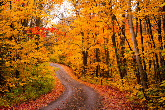 Fall colours in a remote road in Algonquin Provincial Park, Canada