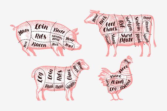 Meat cutting scheme. Butcher shop, butchery concept. Vintage vector illustration