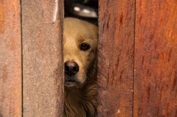 Perro observando a través de la puerta