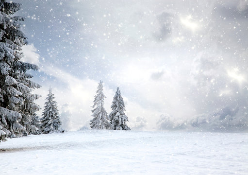 magical Christmas card with fairy tale winter landscape with snow covered firs