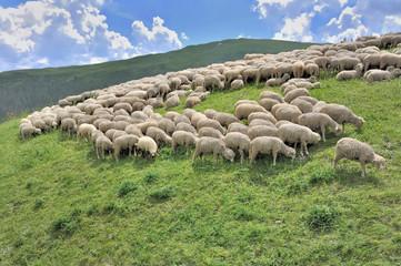 Fond de hotte en verre imprimé Sheep flock of sheep grazing in alpine mountain
