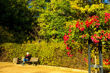 Photo Stands Roe Lady reads a book sitting on a bench of a public park during a sunny autumn afternoon.