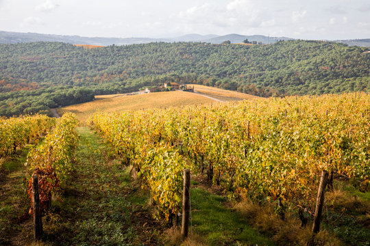 Chianti region in Florence Province, Tuscany, Italy