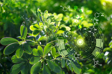 Foto op Aluminium Natuur Biology laboratory nature and science, Plants with biochemistry structure on green background.