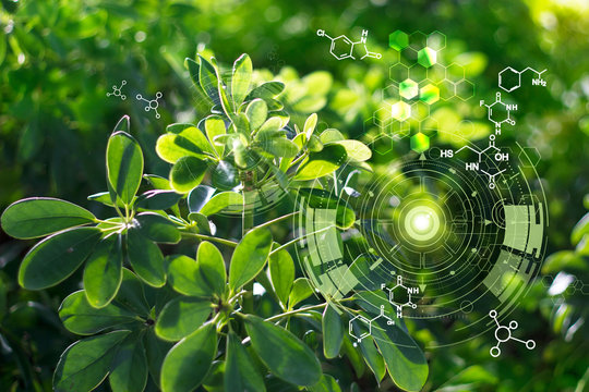 Biology laboratory nature and science, Plants with biochemistry structure on green background.