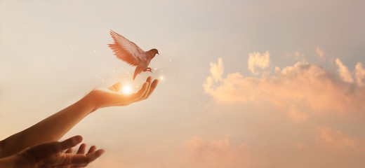 Photo sur cadre textile Oiseau Woman praying and free bird enjoying nature on sunset background, hope concept