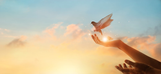 Zelfklevend Fotobehang Vogel Woman praying and free bird enjoying nature on sunset background, hope concept
