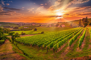 Foto auf Acrylglas Weinberg Spectacular wide angle view of Italian vineyards across the rolling hills at sunset