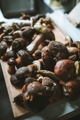 Freshly picked wild mushrooms