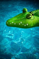 Poster Crocodile Krokodil im Pool