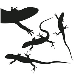 Silhouette of lizards, vector image in flat style