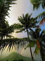 exploring tropical island of tahiti