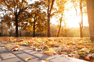 Aluminium Prints Autumn Beautiful leaves on ground in park. Autumn season