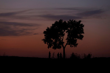 Men are silhouetted as they stand under a tree with the background of setting sun in Islamabad,