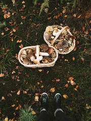 wild mushrooms in basket
