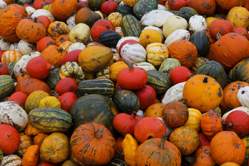 A variety of pumpkins sit in a pile after being picked at the Colchester Pumpkin Patch in Aldham