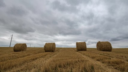 Wall Mural - Yellow haystacks in the field wheat and cloudy sky. Beautiful scenic dynamic landscape agricultural land, 4K time lapse. Beauty nature, agriculture, harvest.