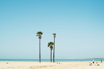 Palm trees in the beach on a sunny day
