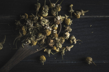 Closeup of dried daisy heap in wooden spoon on dark table for tea making