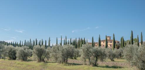 Toskana, Oliven und Zypressen Fototapete