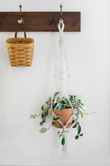 Hanging Basket and Plant on White Wall