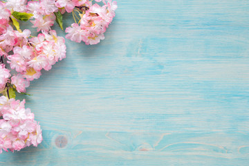 Pink flowers on blue wooden background