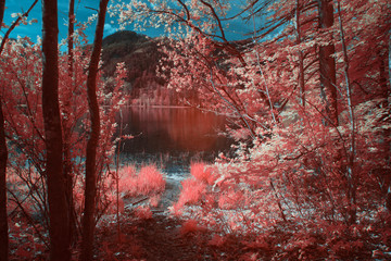 Rural landscape at the area lake Almsee in austria during spring, shot in Infrared IR, colored in coral