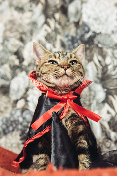 Cute Kitten Wearing Cape