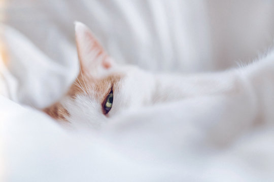 White cat eye looking at camera through bed sheets