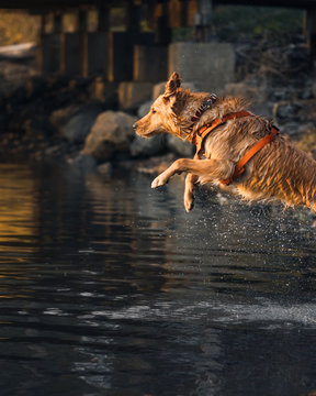 Leaping Dog into a River