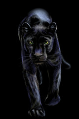 Panther. Artistic, sketchy, color portrait of a walking panther on a black background.