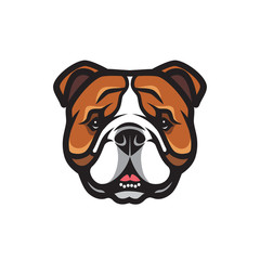 English bulldog face - isolated vector illustration