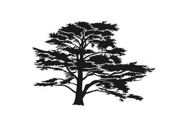 Lebanon cedar tree silhouette. trees and nature design element. isolated vector image
