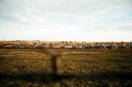 junk yard of vintage american cars and trucks