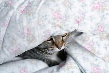 Cute cat hidden under floral blanket