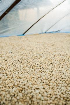 Wet Process Coffee