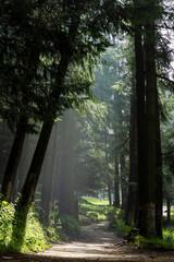viaje a la naturaleza