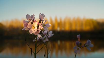 Photo de fleur au bord d'un lac