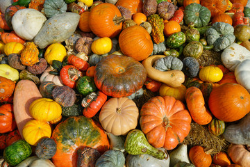Background of pumpkins and squash in Dallas, Texas