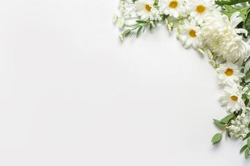 Wall Mural - Beautiful chrysanthemum flowers on white background