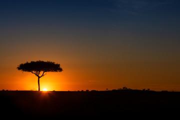 Wall Mural - Single Acacia Tree on Horizon at Colorful Sunset