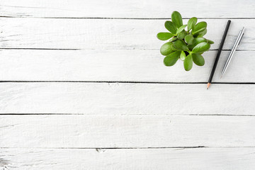 Green succulent with pen and pencil on white wooden background with copyspace. Office desktop concept