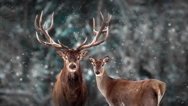 Noble deer family in winter snow forest. Artistic winter christmas landscape. Winter wonderland.