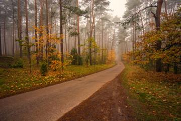 Poster Road in forest Leśna droga w kolorowym jesiennym, nostalgicznym klimacie